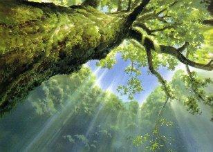 hipotesis28-bosque1