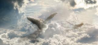 cropped-observando-el-paraiso-ballenas-entre-nubes1.jpg